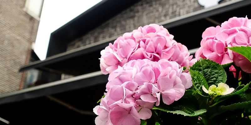 [Seoul。食] 弘大 cafe DROPTOP