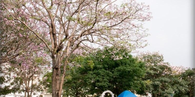 [台中。北屯] 洋紅風鈴木的粉色浪漫小確幸