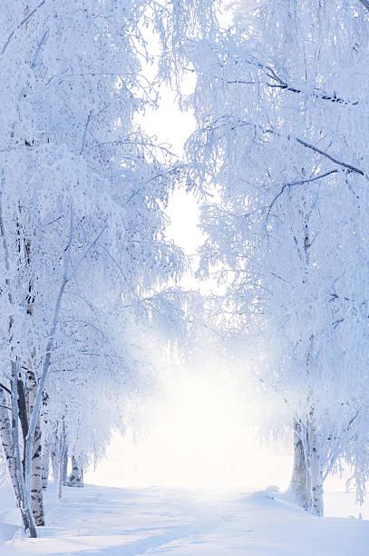 Wallpaper Hd Portrait Orientation フィンランド のスマホ壁紙 Id 184865149 『冬の風景』 壁紙 Com