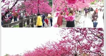 【中部旅遊】后里泰安賞櫻~平地就有免費賞櫻花景點囉