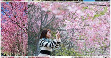 2015年武陵櫻花季攻略,開放日期、搭車購票、申請通行證一次搞懂