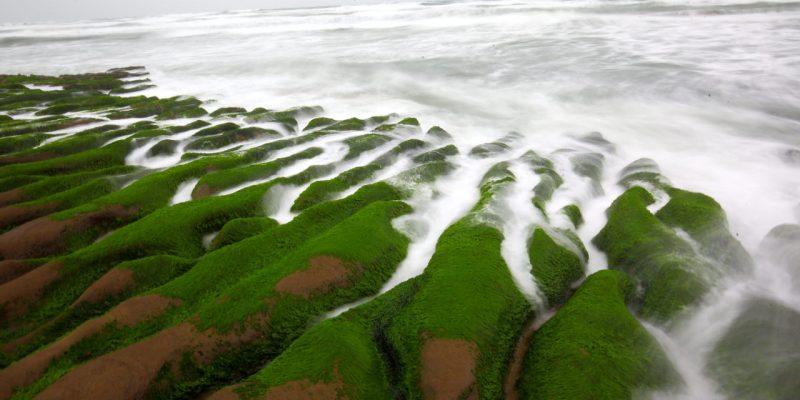 [新北石門]季節限定!春天才會出現的天然綠地毯!石門老梅綠石槽
