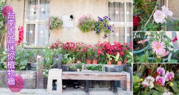 【台南景點】近鶯料理.天壇|拍照好好拍~台南市區迷你植物牆