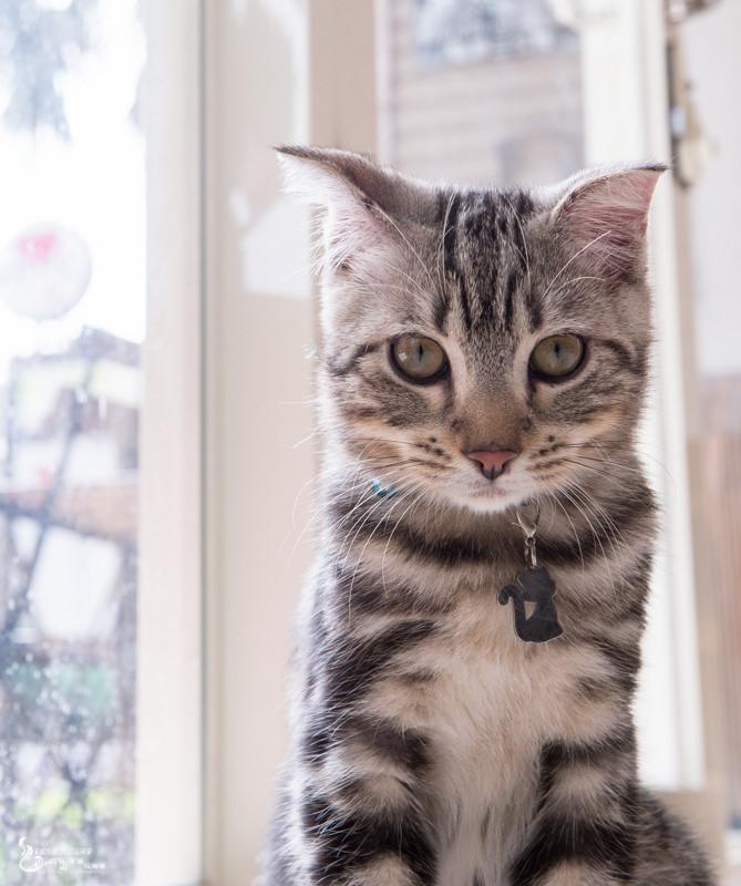 龜山》MAOYE貓爺 – 貓餐廳,貓Brunch