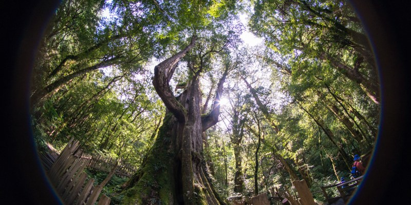 新竹景點推薦》司馬庫斯Qalang Smangus. 下篇 - 上帝的部落 神木群寧靜之旅