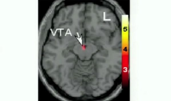 """愛情と性欲はまったく別物–恋愛科学の第一人者が語る""""恋する脳""""の仕組みとは?"""