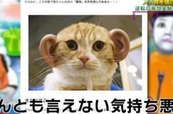 ネコ耳ならぬ人耳をネコに付けたら可愛くなるのか? とある企画の裏話