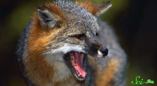 fox10-(550x304)