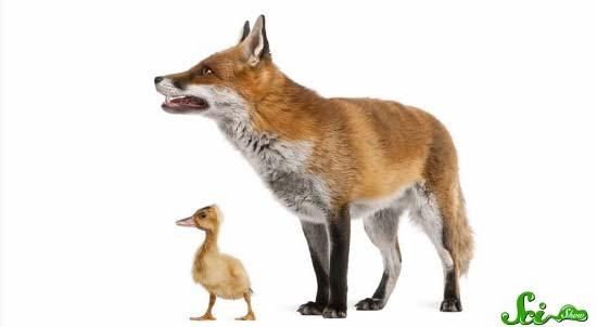 fox11-(550x302)