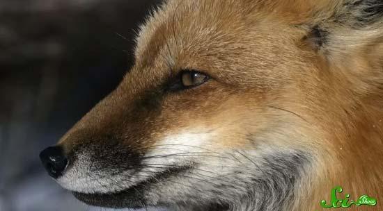 fox5-(550x304)