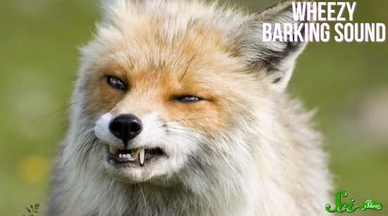 fox6-(550x306)