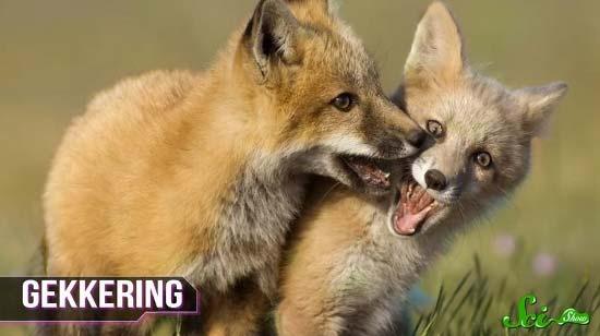 fox8-(550x308)