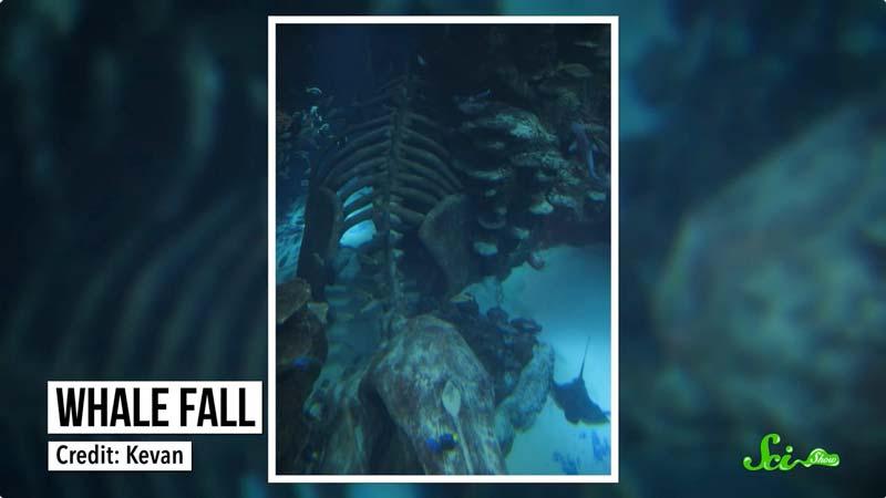 海底の豊かな実り クジラの死骸が生み出す「鯨骨生物群集」の可能性