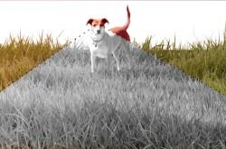 犬の目から見える世界–白黒しか認識できないって本当?
