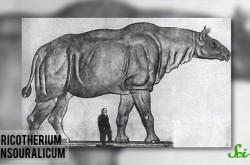 史上最大の恐竜は全長60メートル 現代の陸上生物が巨大にならない理由