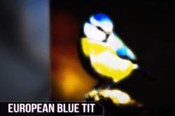 鳥には世界がどう見えている? 人間にはない驚きの眼の機能