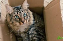 猫はどうして箱に収まりたがるのか? 理由を科学的に解説