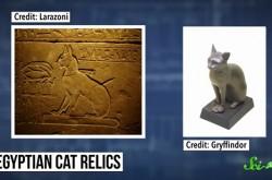 9500年前からペットだった? 猫と人間の深い関係