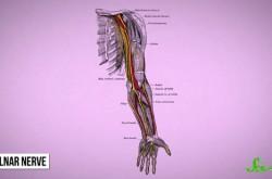 肘をぶつけたときのビリビリしびれる感覚の正体