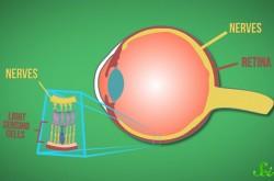 視界に入っているのに見えない 誰の目にもある「マリオット盲点」の不思議