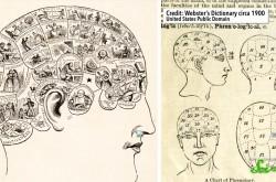 骨の形が個性を決定する? 19世紀に本当にあった疑似科学「骨相学」