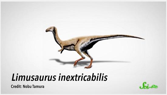 恐竜の歯が鳥類のくちばしに? 科学史における大ニュース