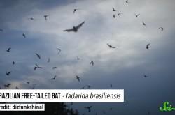 史上最大の素数、世界最速のコウモリ… 2016年に歴史を塗り替えた新発見