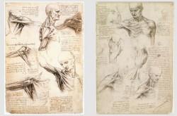 ダ・ヴィンチ「足は人間工学上の最高傑作である」アートにおける人体解剖の歴史