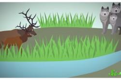"""オオカミが増えると小鳥も増える? 生態系に大きな影響を与える""""キーストーン種"""""""