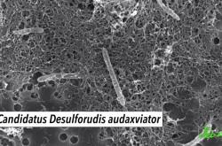 地球外生命体の可能性アリ 岩石の中でも生存できる「極限環境微生物」の生態