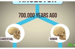 ネアンデルタール人のDNAはあなたの中にも眠っている?