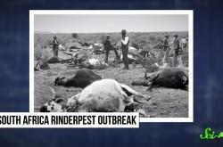 牛疫––人類はなぜ死に至る病を撲滅できたのか