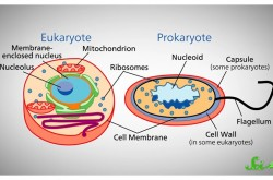 始まりの生命「共通祖先」はいつ・どこで・どのように誕生したのか?