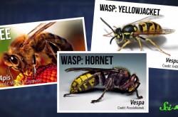蜂の巣はなにでできてるか知ってる? 今日から使えるハチ雑学