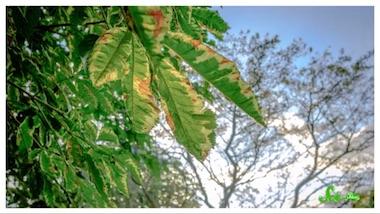 実は植物も日焼けしていた? 紫外線が葉に与える影響