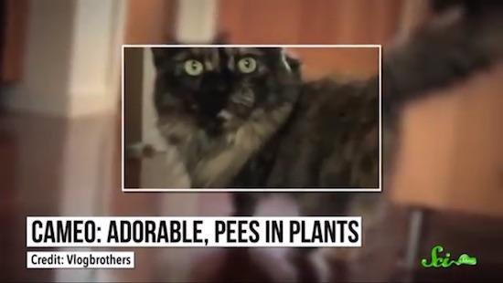 なぜネコは吠えることができないのか?