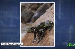6000種を超えるカエルたちの多様性のルーツに迫る