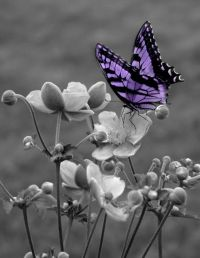 Black and White Purple Butterfly On Flower Wall Art Matted ...
