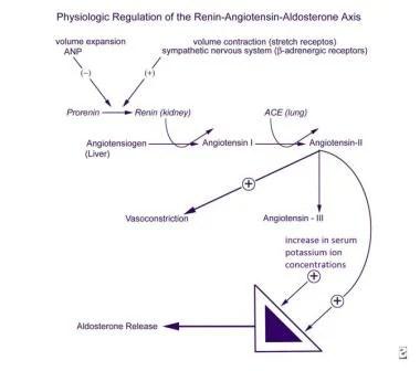 Hyperaldosteronism Background, Pathophysiology, Etiology