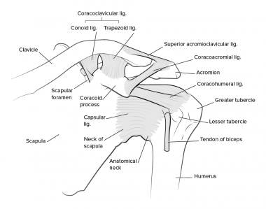 Acromioclavicular Joint Injections Background