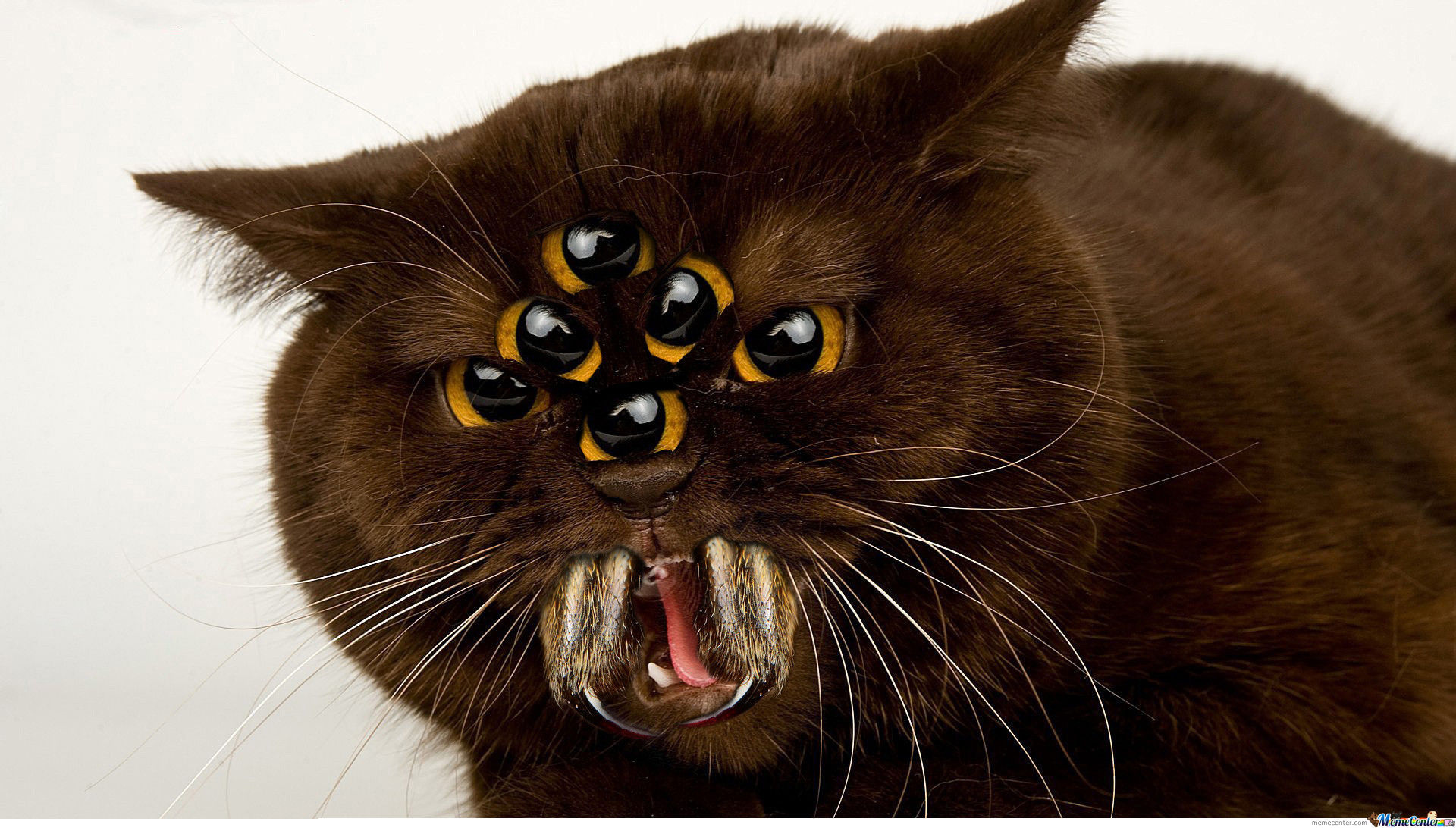 Cute Jumping Spider Wallpaper Spider Kitty Scary Kitty Six Eyes Upon Its Head Bitey