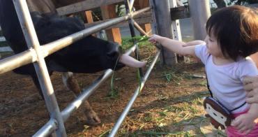 彰化親子旅遊景點推薦~銀行山禾家牧場,吳小妮餵牛初體驗