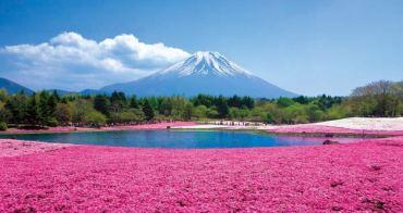 2016~2017富士芝櫻祭|河口湖富士芝櫻節(會場交通巴士資訊),富士山腳下的粉紅色地毯