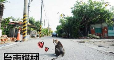 台南安南景點 | 台南貓村 鹿耳門天后宮 貓奴必去
