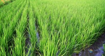 苗栗苑裡景點 | 稻鴨庄 看得見生命 看的見生態 生機泉源孕育的搖籃