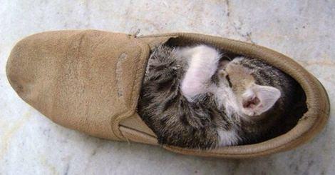 18张超可爱动物睡觉照,但睡的地方却超怪异!