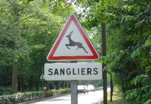 sanglier-insolite