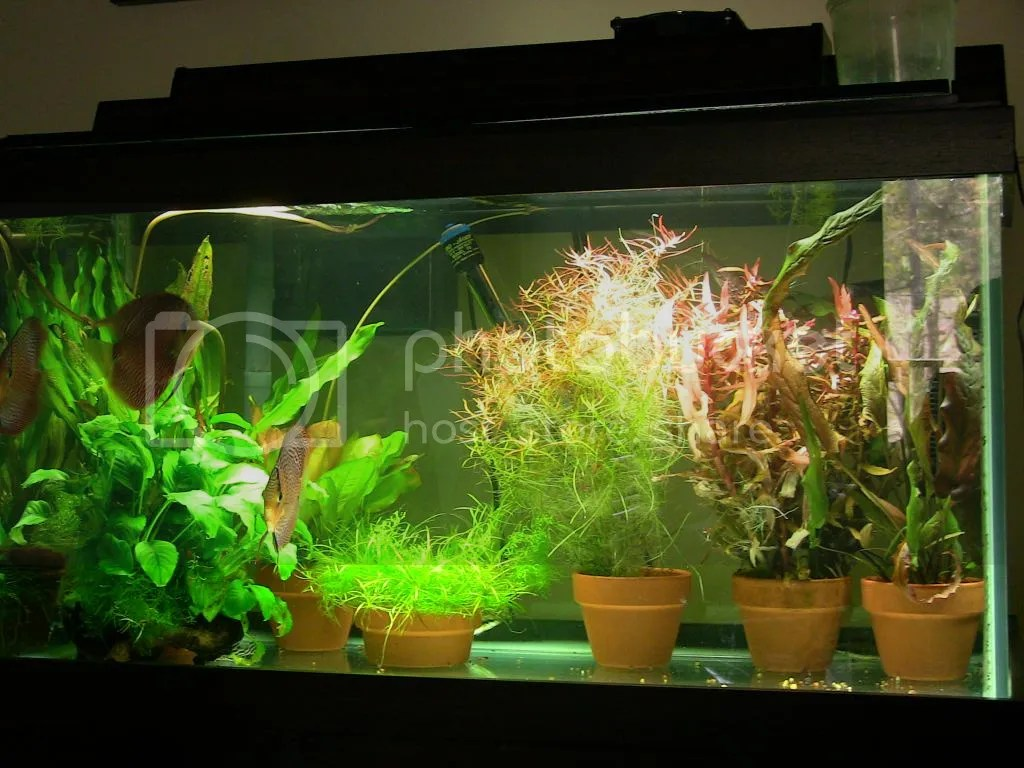 Aquarium Bottom Light Please Post Pics Aqua Scaling Ideas For Lightly Planted