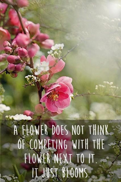 Dalai Lama Quotes Wallpaper Flower Quotes Flower Sayings Flower Picture Quotes