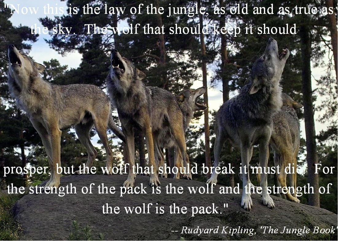 Lone Wolf Wallpaper Quote Wolf Quotes Wolf Sayings Wolf Picture Quotes